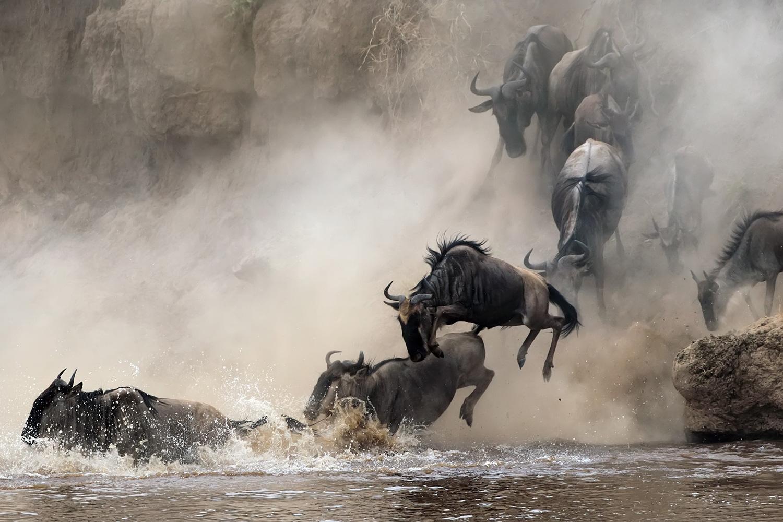 fraud-migration-wilderbeast